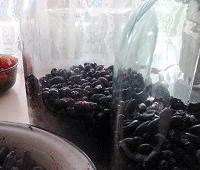 компот из ягоды жимолости