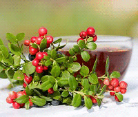 полезные свойства брусничного листа и ягод