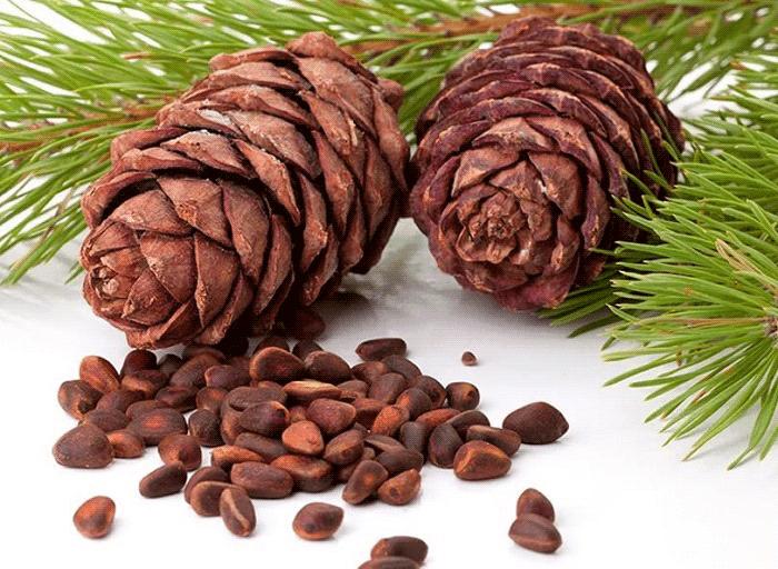 Кедровый орех полезные свойства и противопоказания