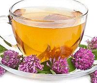 клевер полезные свойства чая