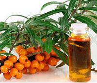облепиха полезные свойства и противопоказания масла