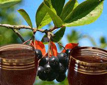 настойка на водке из рябины черноплодной