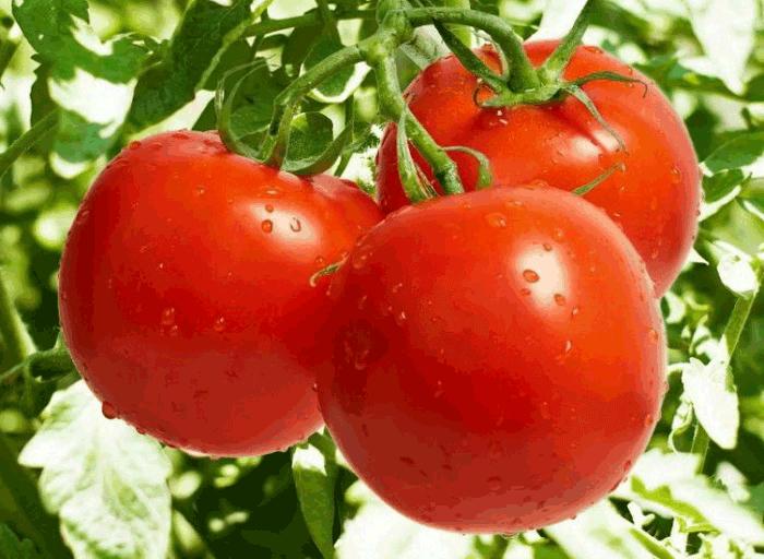 полезные свойства помидоров для организма