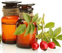 масло шиповника полезные свойства