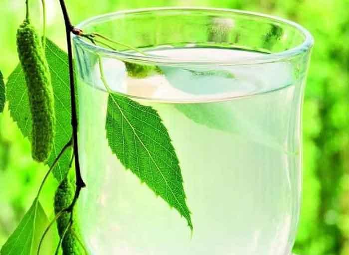 Полезные свойства березового сока и противопоказания
