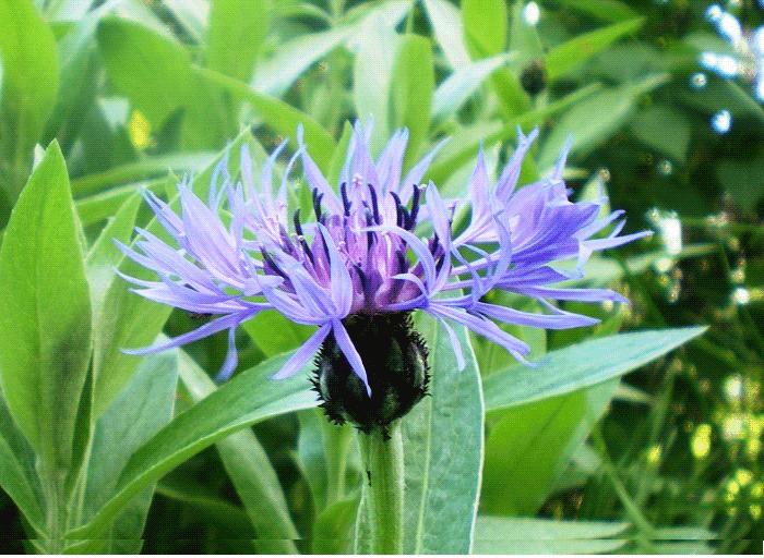 цветы полезные свойства