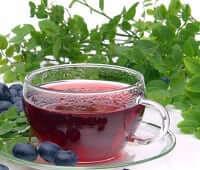 черника полезные свойства и противопоказания чая