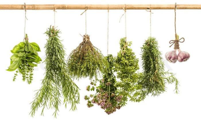 как сушить травы