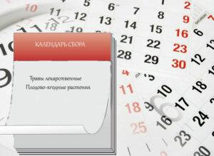 календарь сбора трав